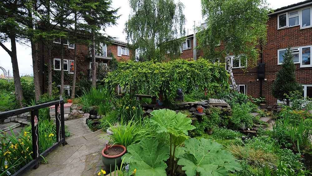 Sanford Housing Co-op gardens